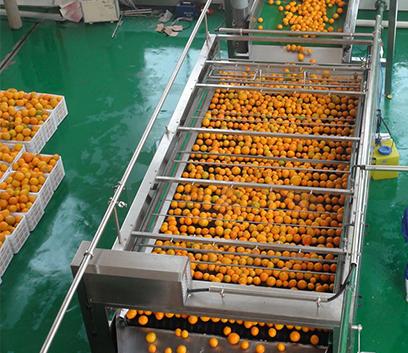 果蔬清洗生产线